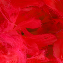 Red Feathers for Balloons - Eleganza 50g Bag 1PK